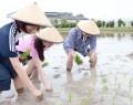 明和の日本酒計画で田植え