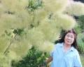 茅原町でスモークツリー