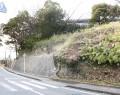 松坂城のクロマツ