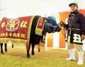 191125松阪肉牛共進会