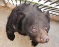 200319「きっと日本一」五桂のクマ