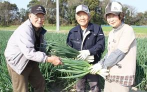 規格外で売れないネギを友人の世古さん(左)に託す浅沼さん夫婦=柿木原町の畑で