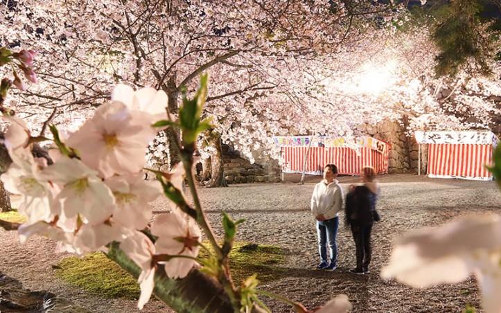 200404夜桜ライトアップ