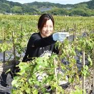 200618伊勢芋畑を守りたい