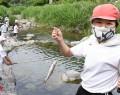 200610アマゴ釣り