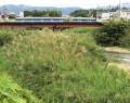 200709阪内川に土砂や木