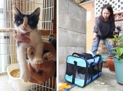 200701清生町で子猫遺棄