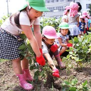 200722枝豆収穫