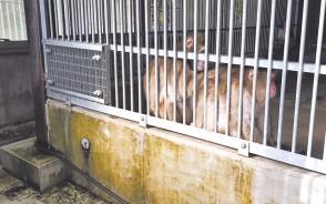 200915中部台公園の猿