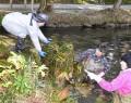 201111丹生大師で外来の藻除去