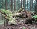 201130みえの森フォトコン
