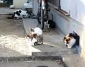201215野良猫問題
