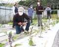 210528有機野菜農法